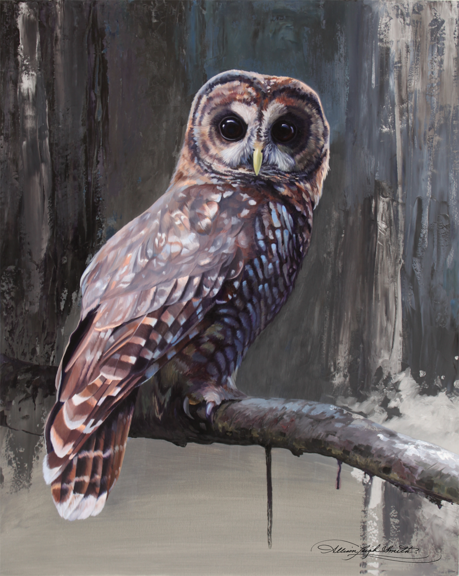 SOLD  Northern spotted Owl 16x20