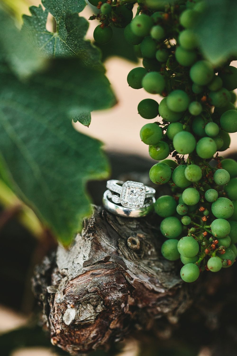 vineyard wedding ring shot