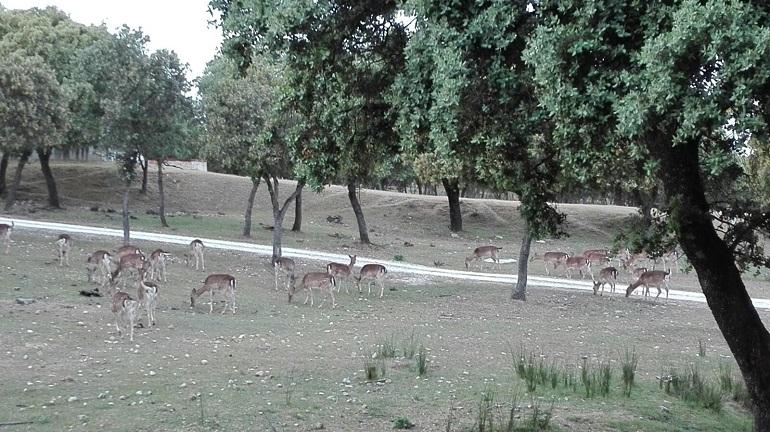 Vista Monte del Pardo - Family - Restaurante Latigazo