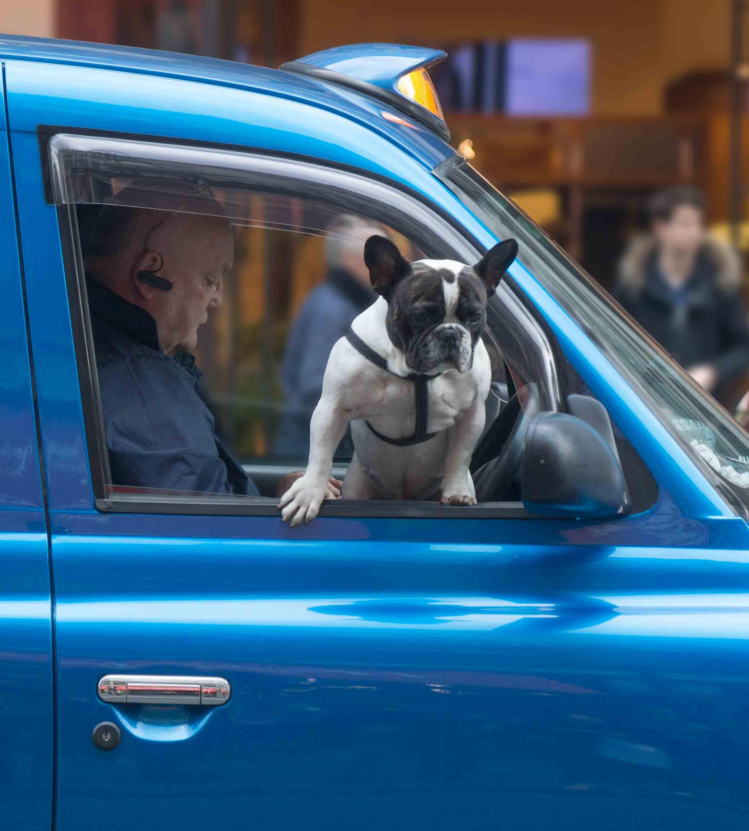 taxi dog 2-6.jpg