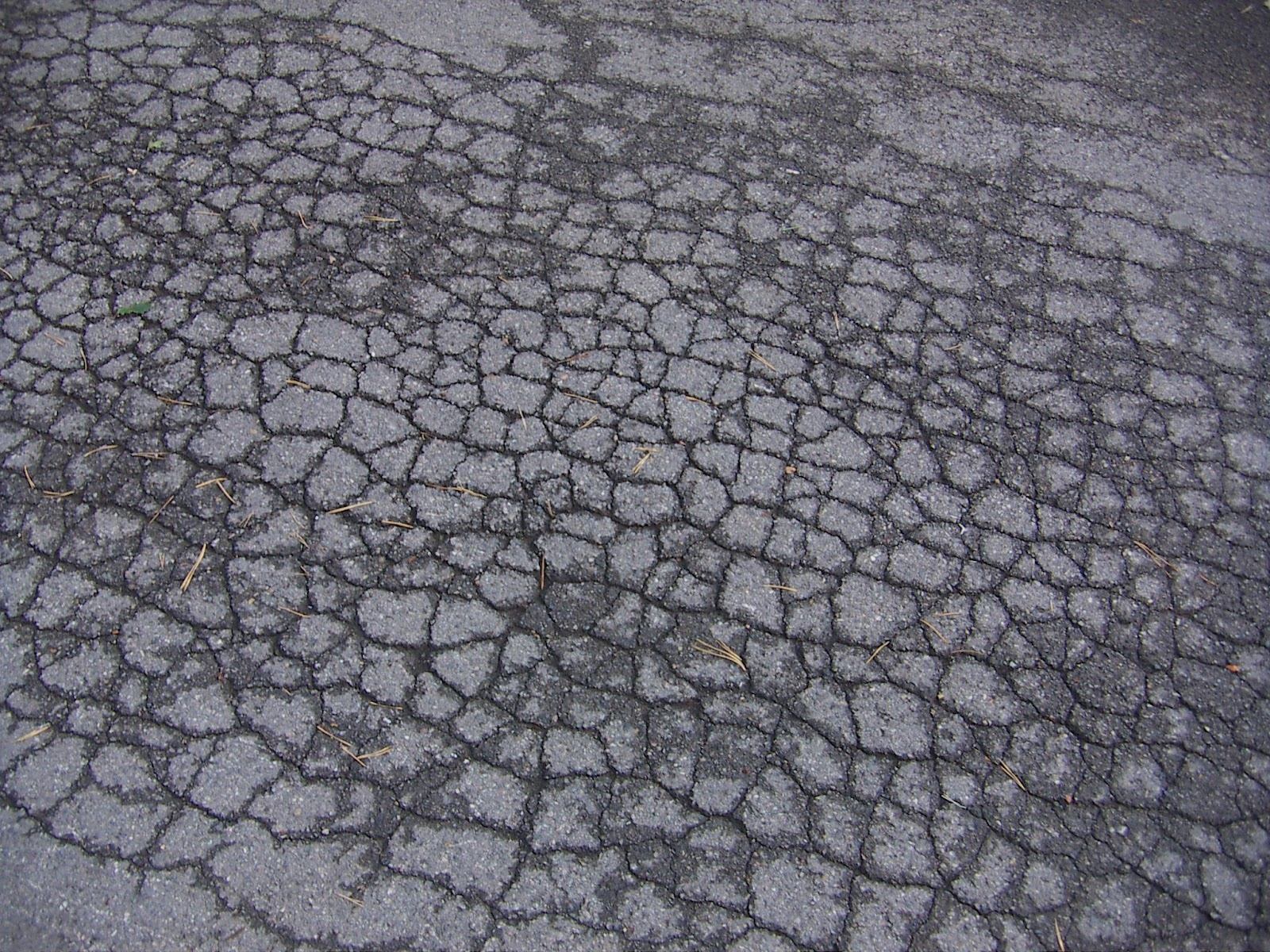 """Alligatored"" asphalt is easiest to spot after it has rained"