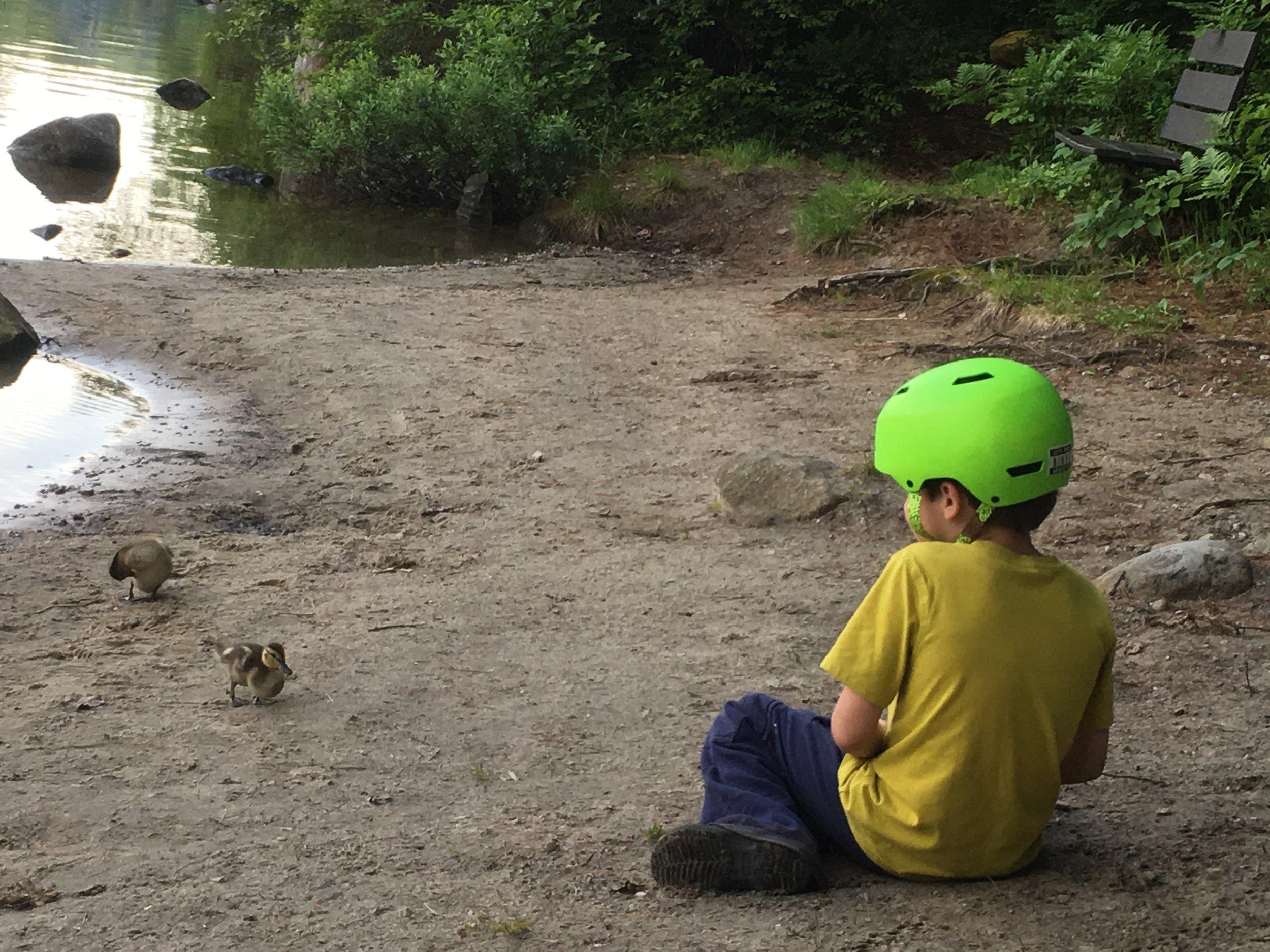 Ducklings at Ricker.