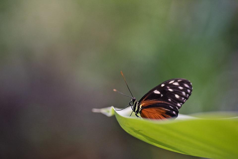 1_kronvallspixlar_fjärilar.jpg