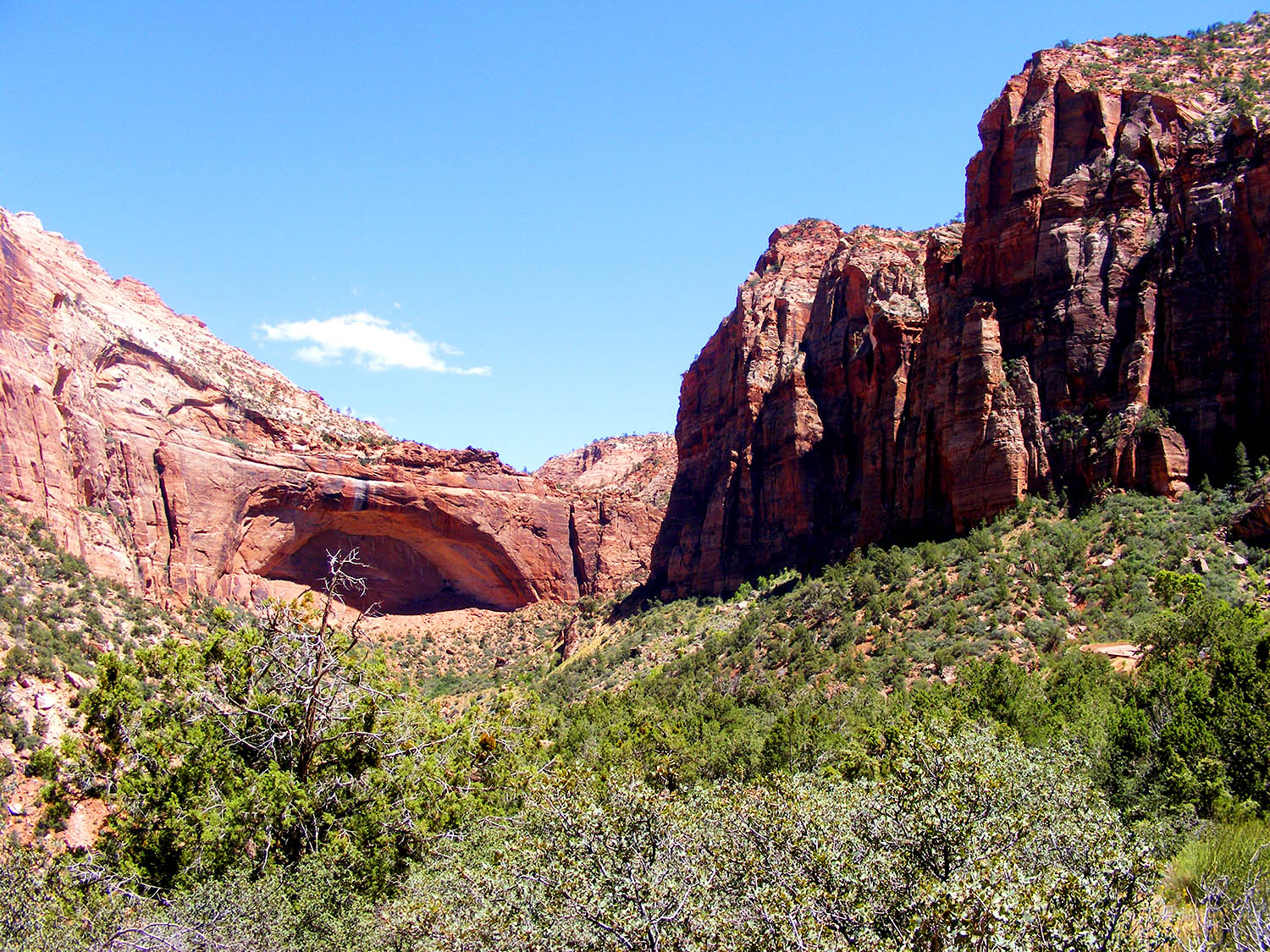// Zion Canyon National Park