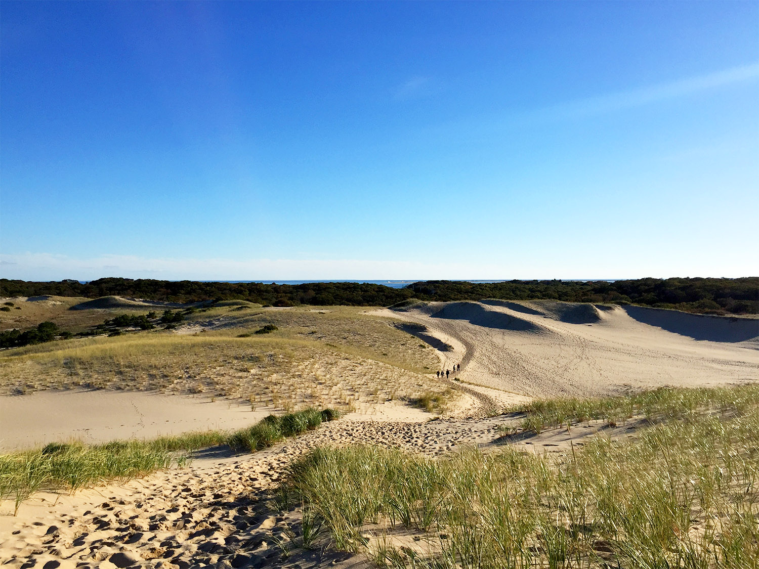 // sand dunes outside of Provincetown
