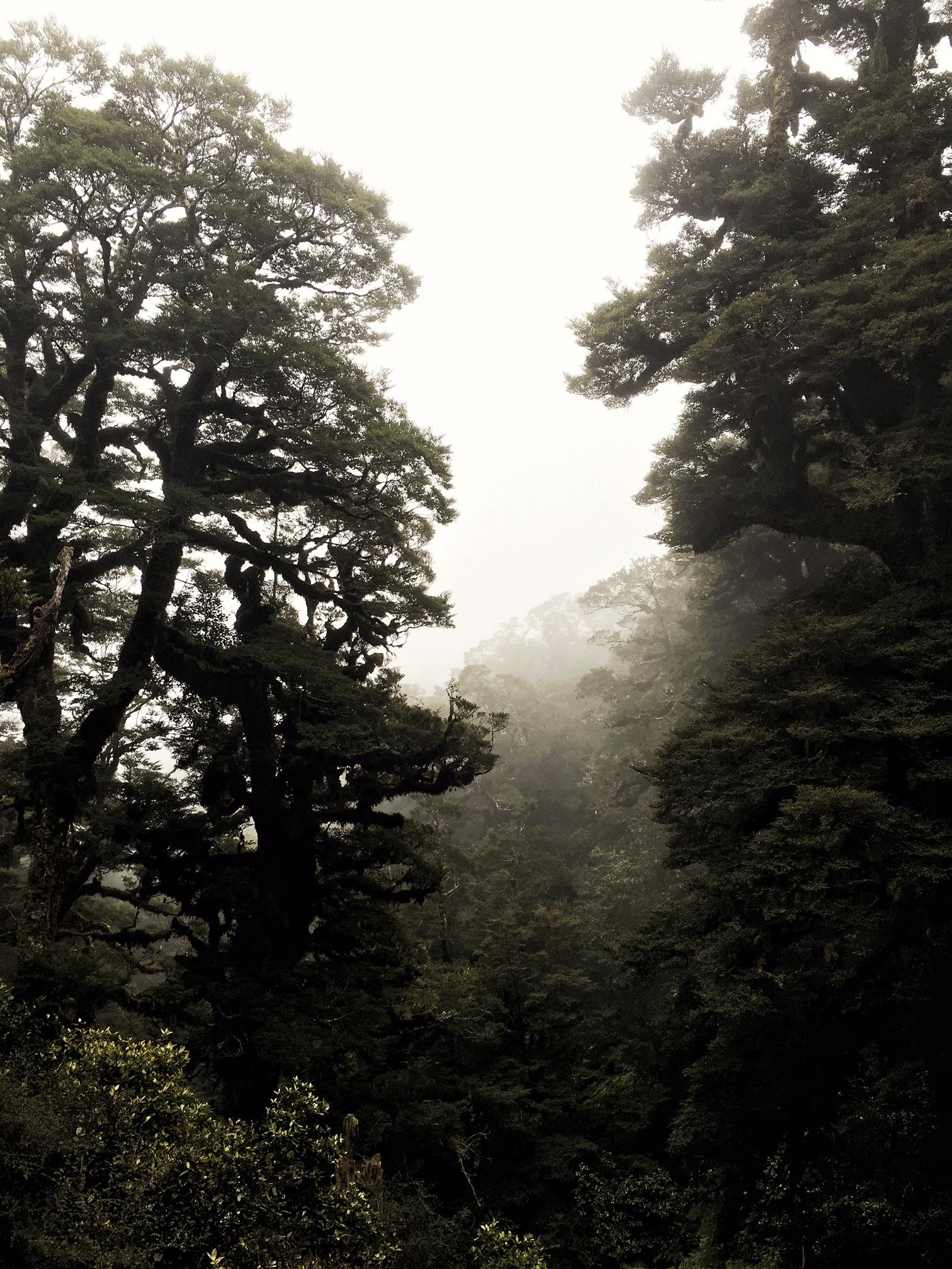 // Mist in the bush