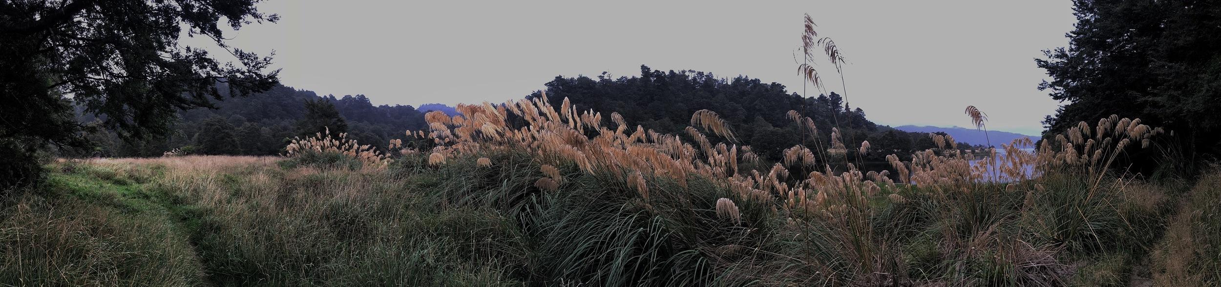 //  Through the bush