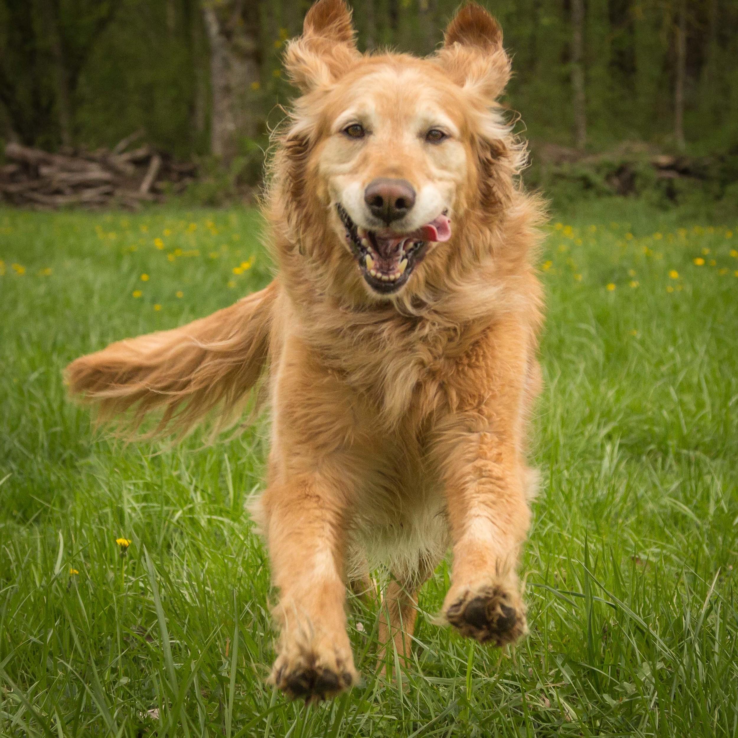 dog-marley-5.jpg