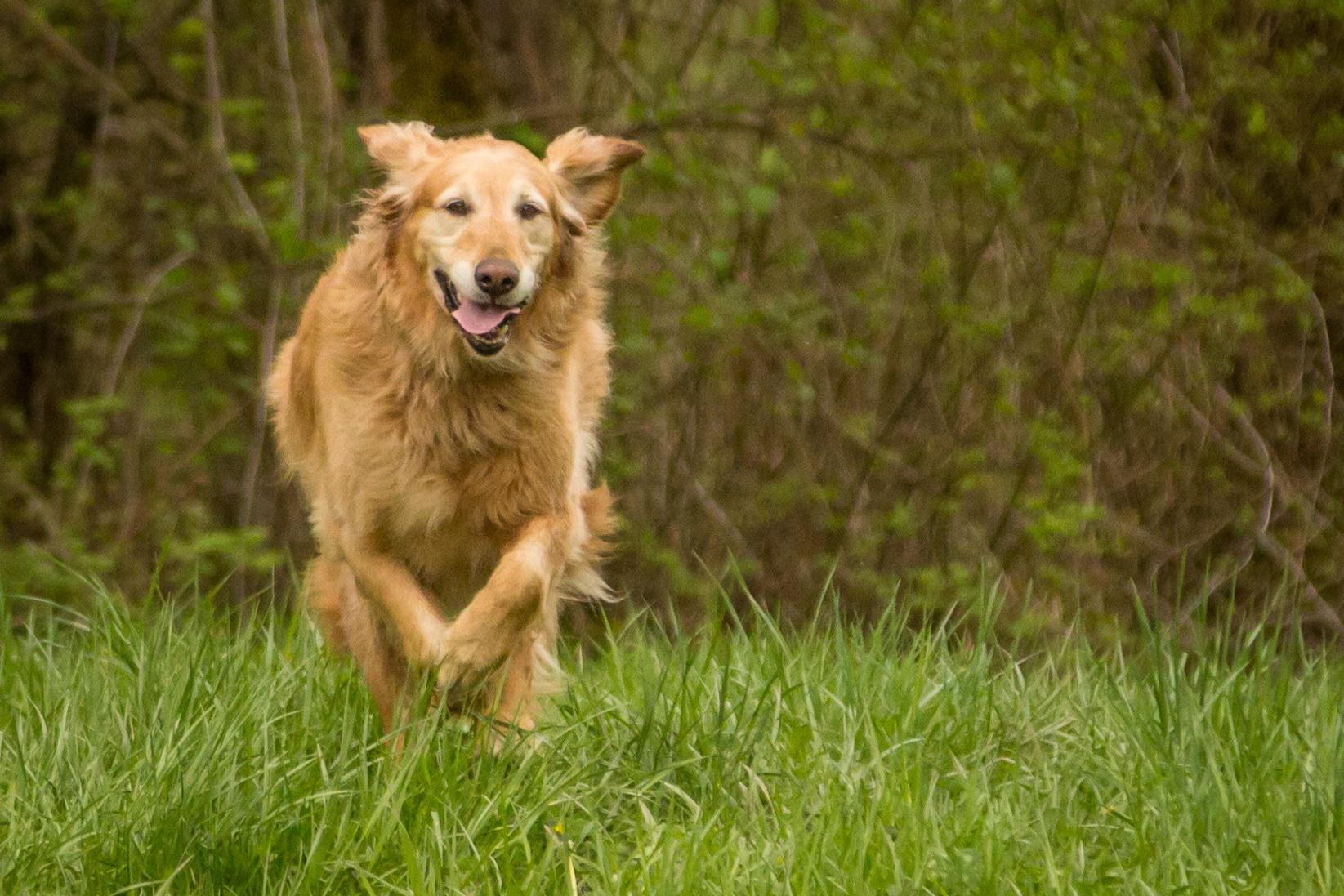 dog-marley-4.jpg