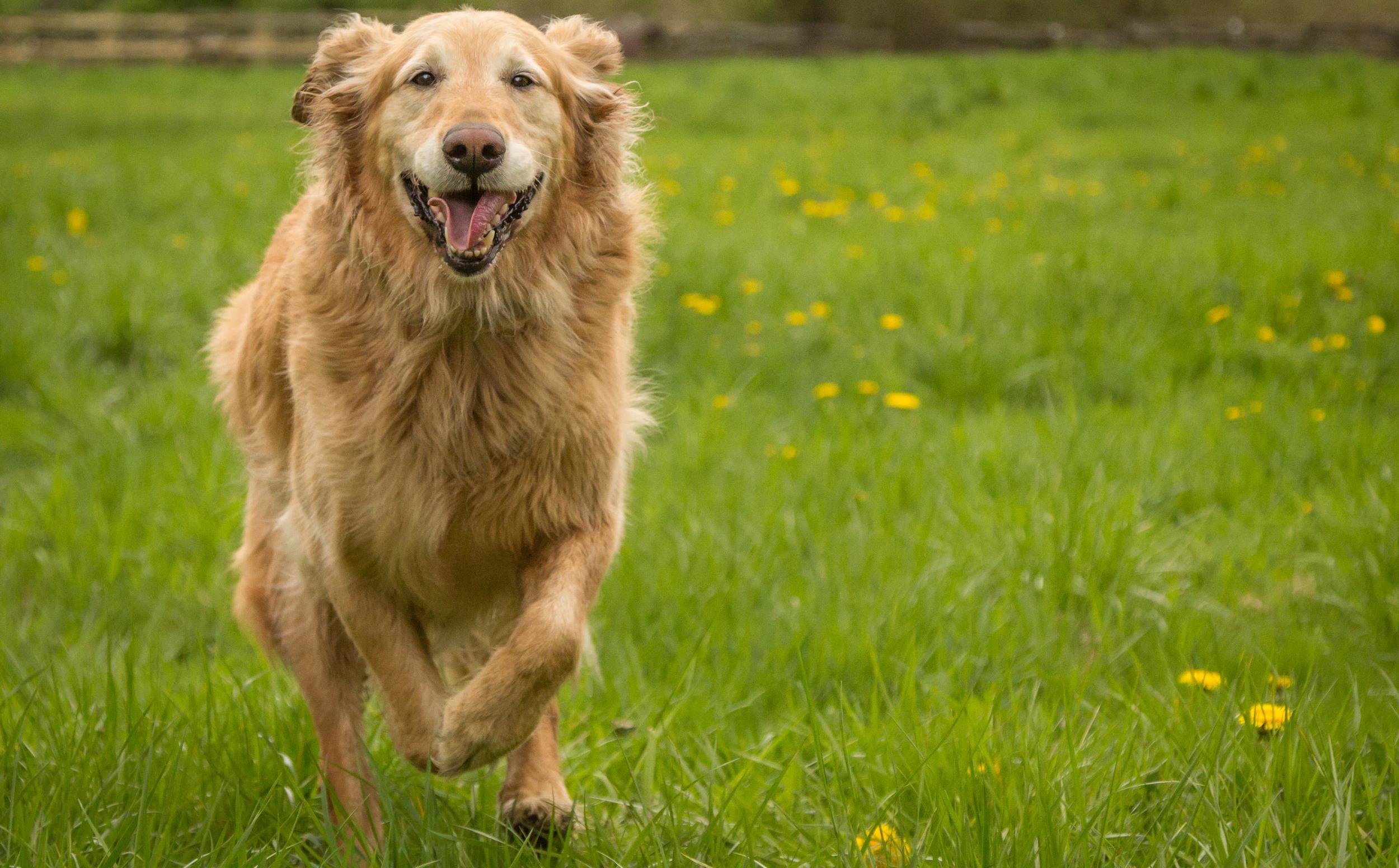 dog-marley-6.jpg