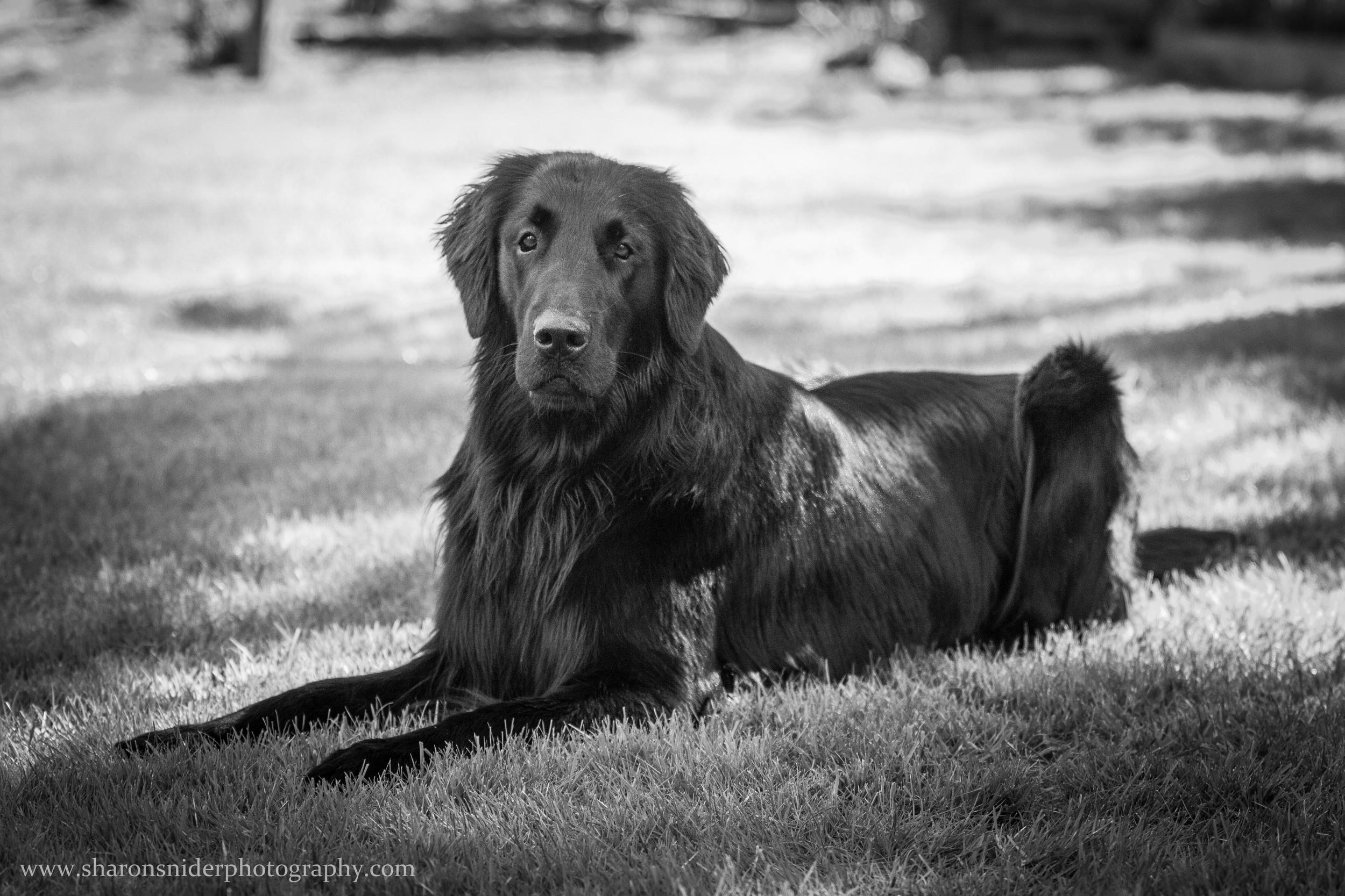 courtenay dogs-9385.jpg
