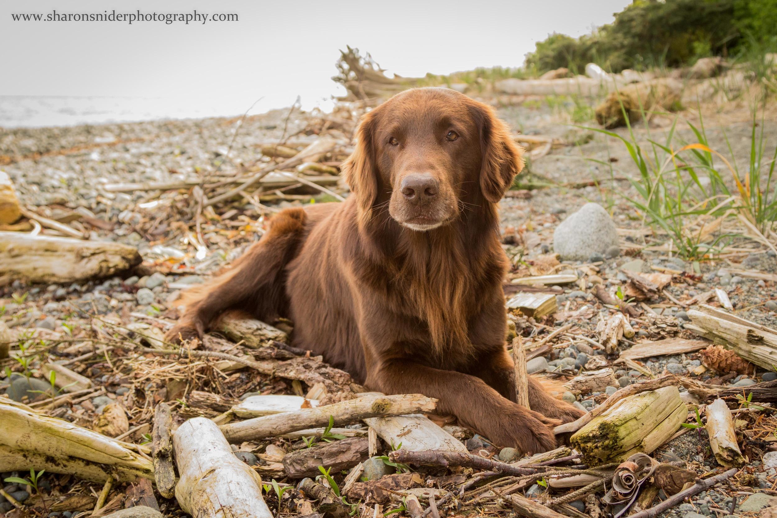 courtenay dogs-9453.jpg