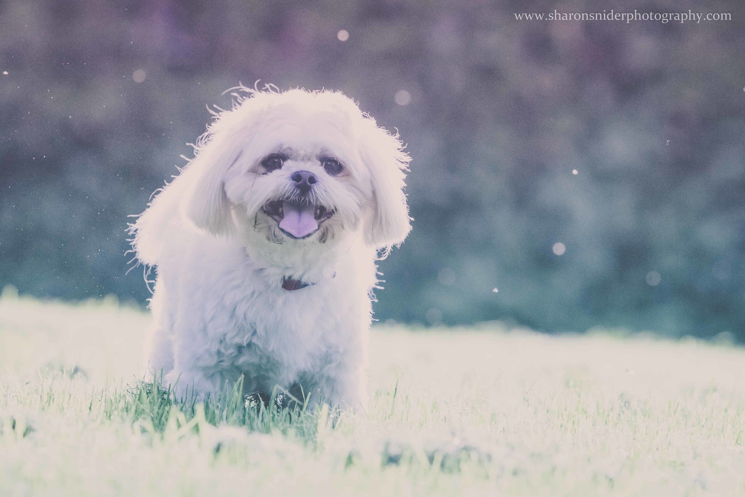 cubbie dog-9852.jpg