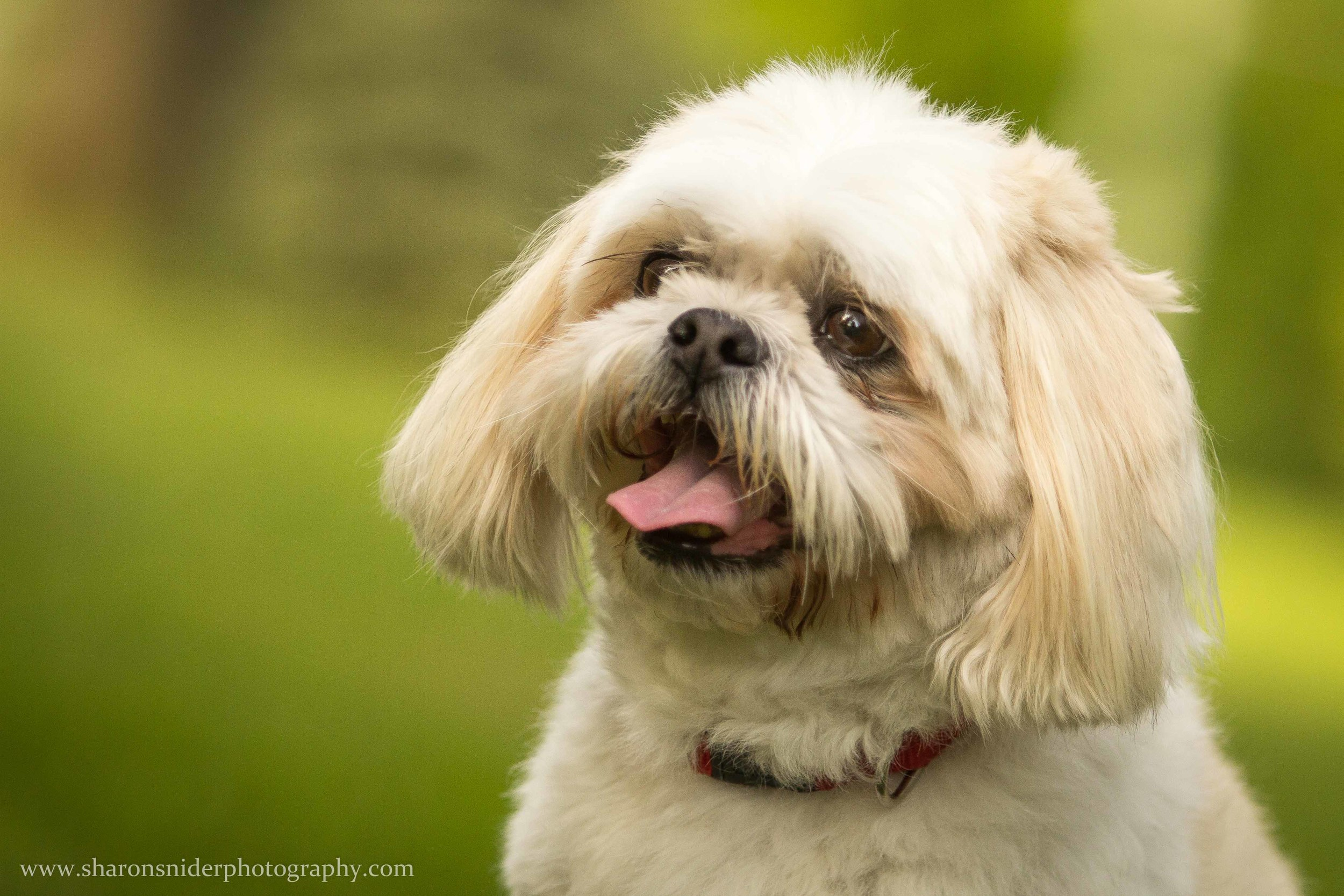 cubbie dog-9822.jpg