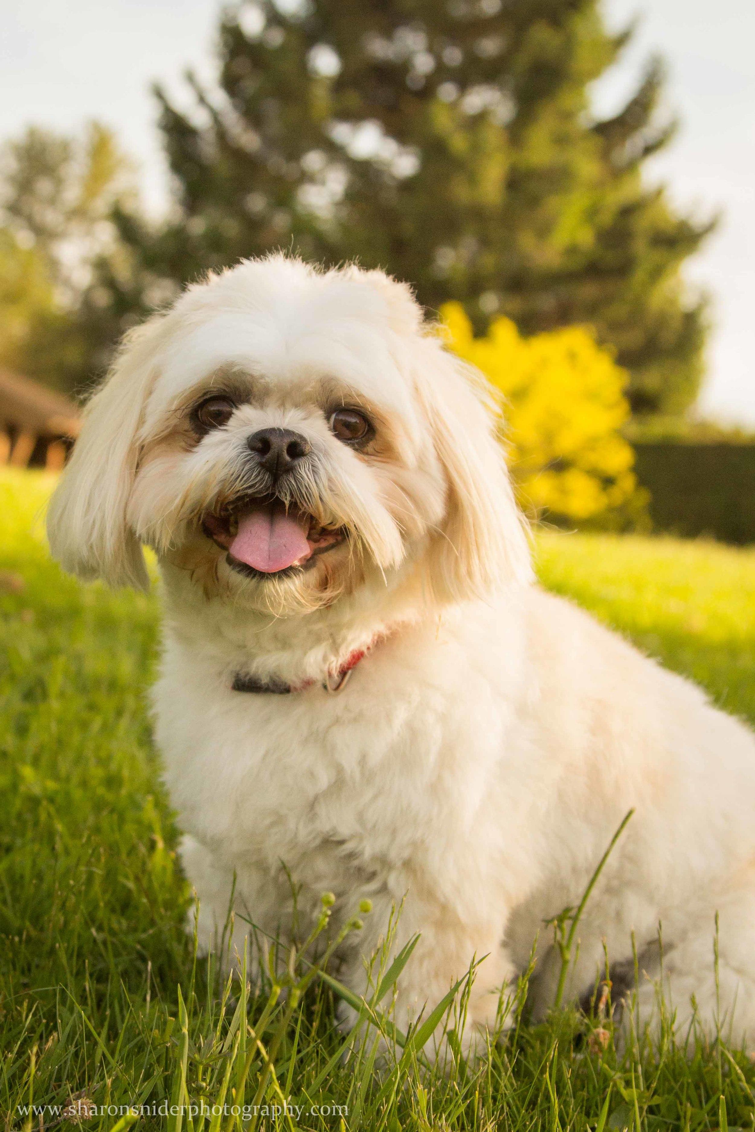 cubbie dog-9892.jpg