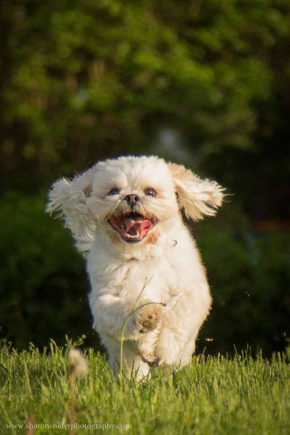 cubbie dog-9909.jpg
