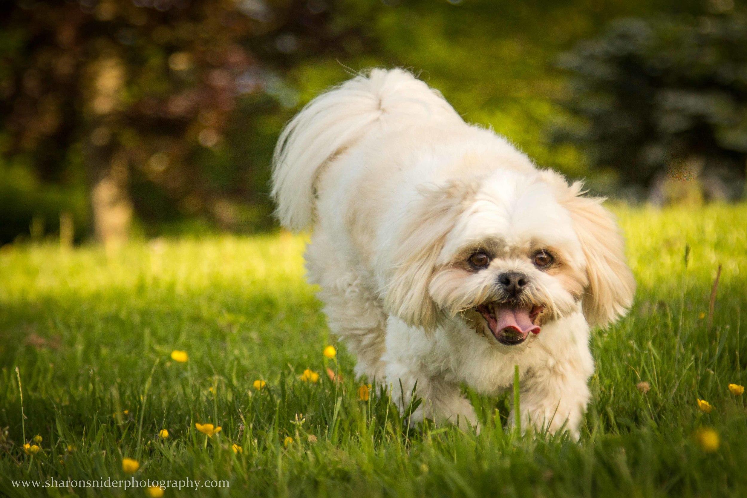 cubbie dog-9928.jpg
