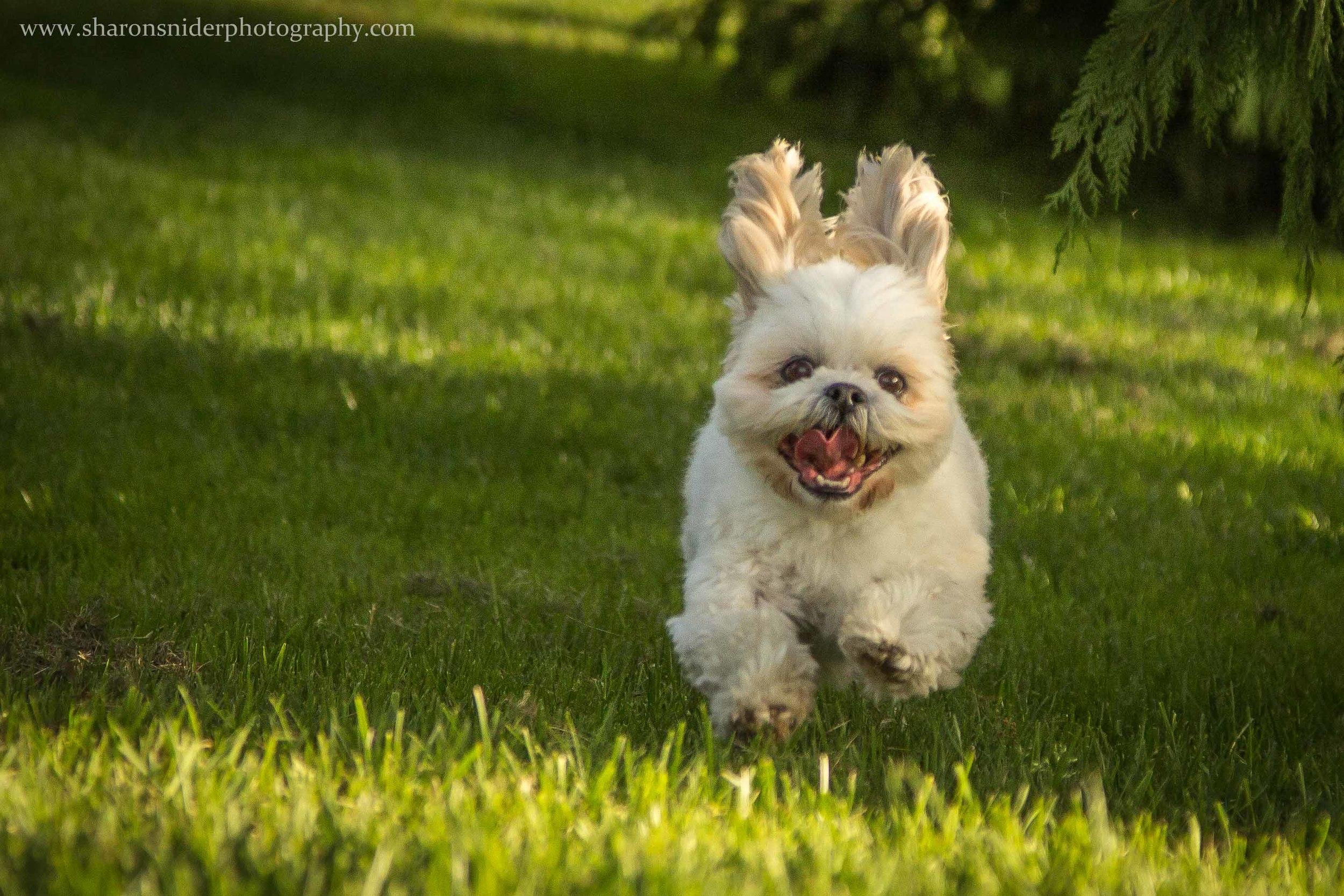 cubbie dog-9880.jpg