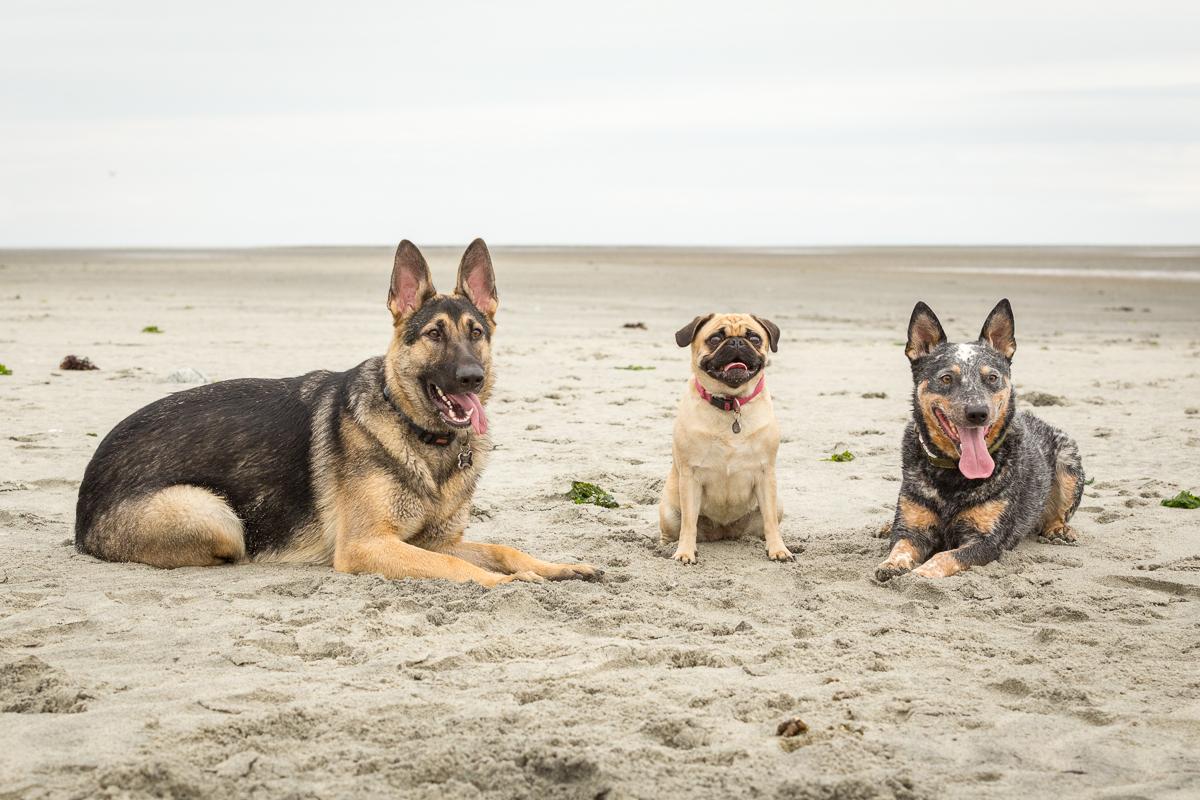comox dogs-2.jpg