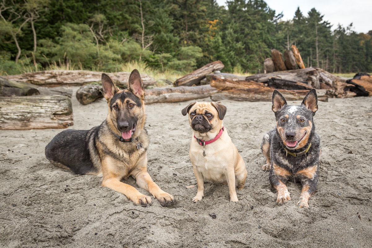 comox dogs-33.jpg