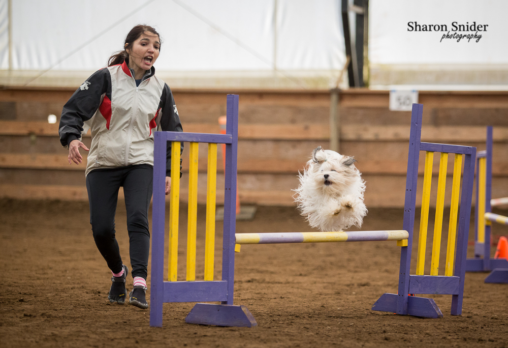courtenay dog agility-5700.jpg