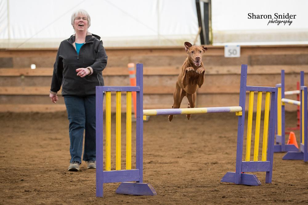 courtenay dog agility-5713.jpg