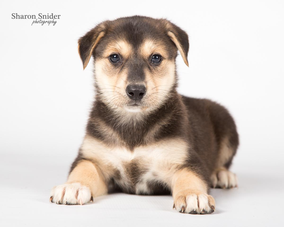 comox puppy-6097.jpg