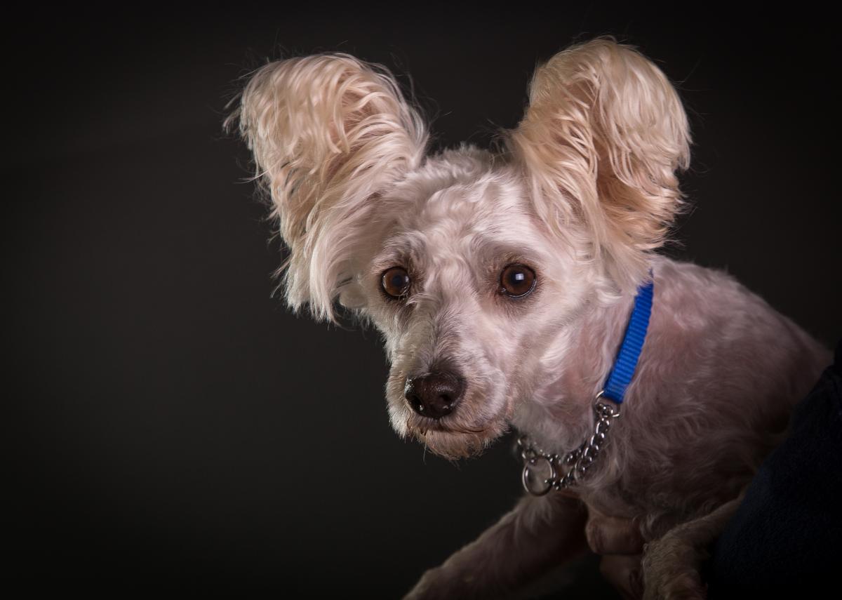 comox photography dog-6585.jpg