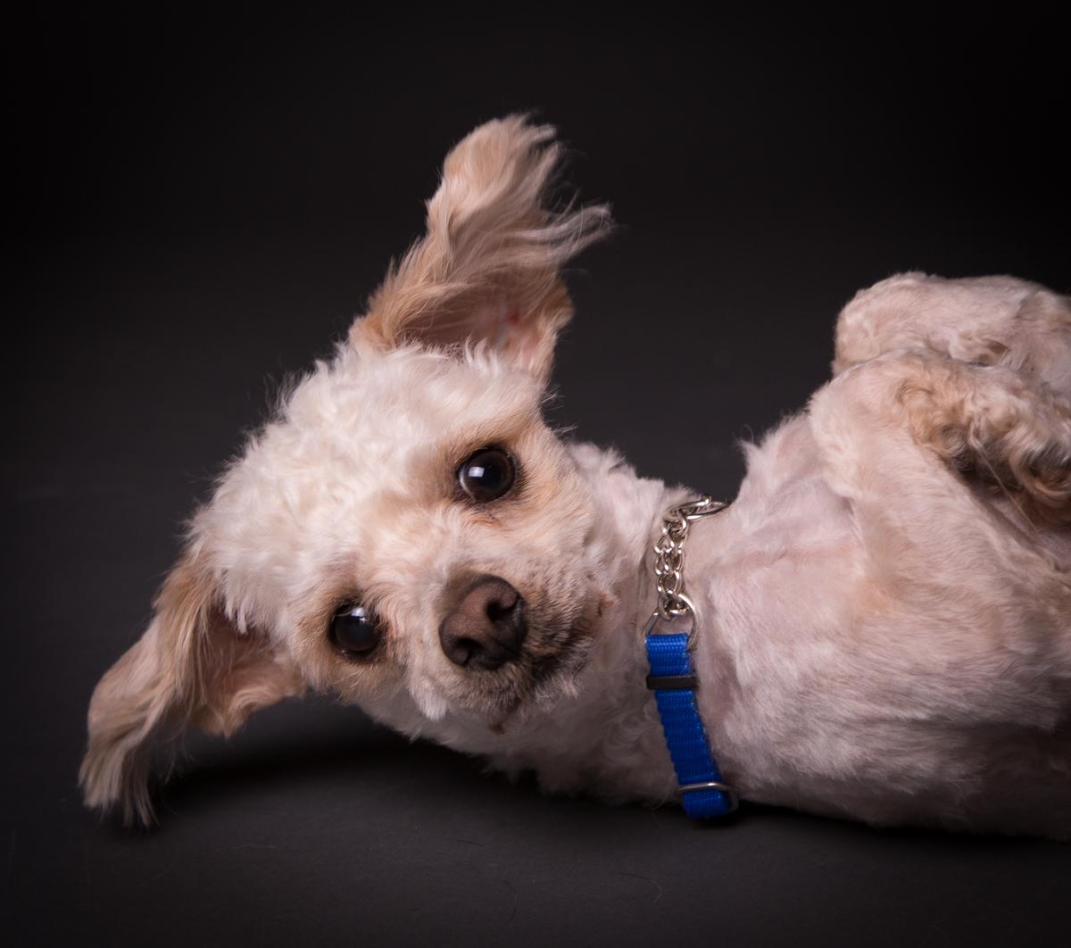 comox photography dog-6572.jpg