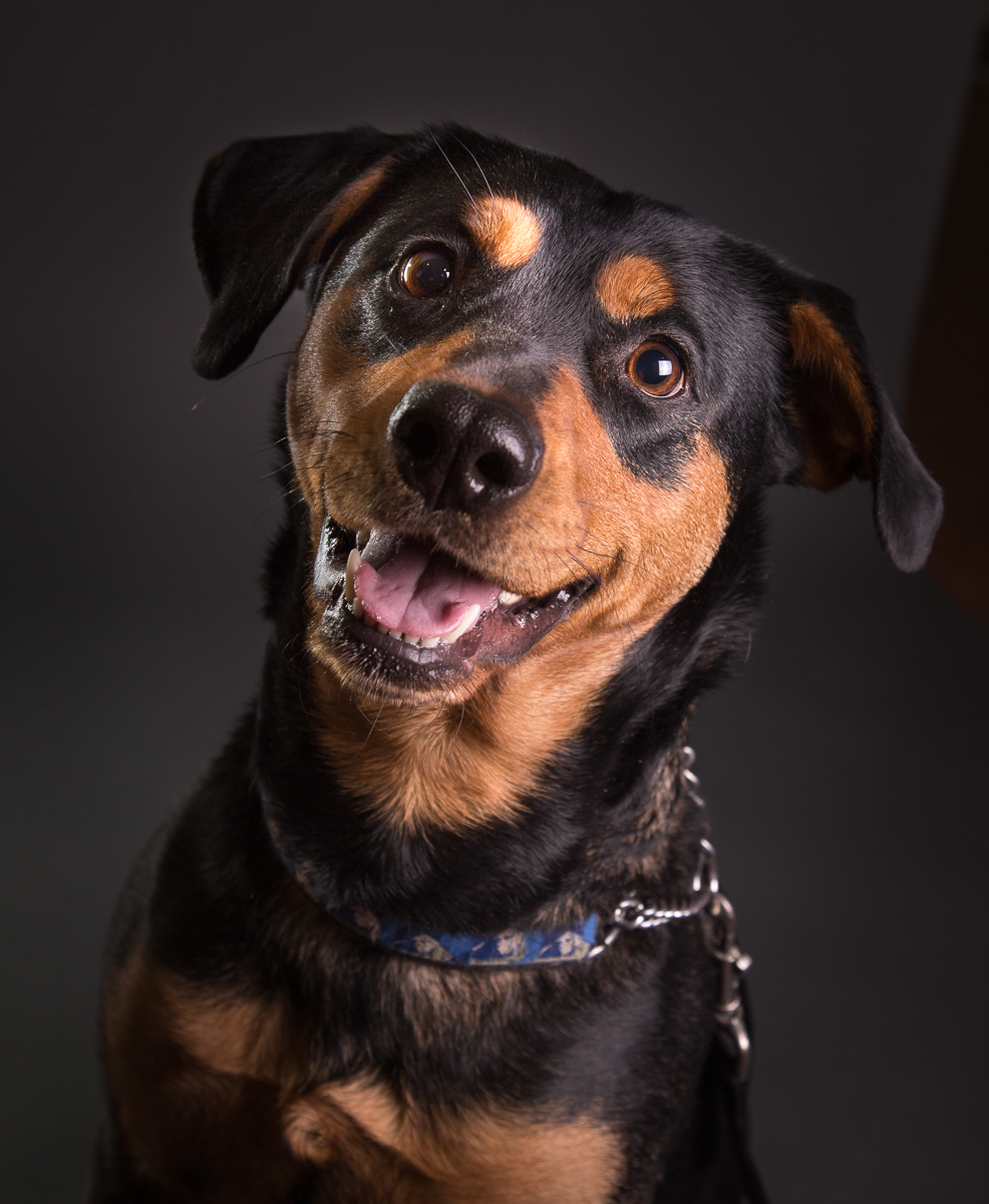 comox photography dog-6601.jpg
