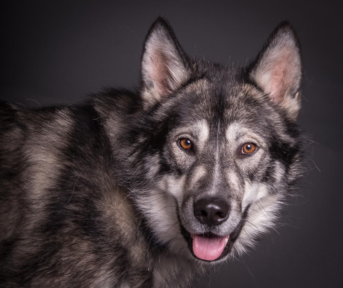 comox photography dog-6618.jpg
