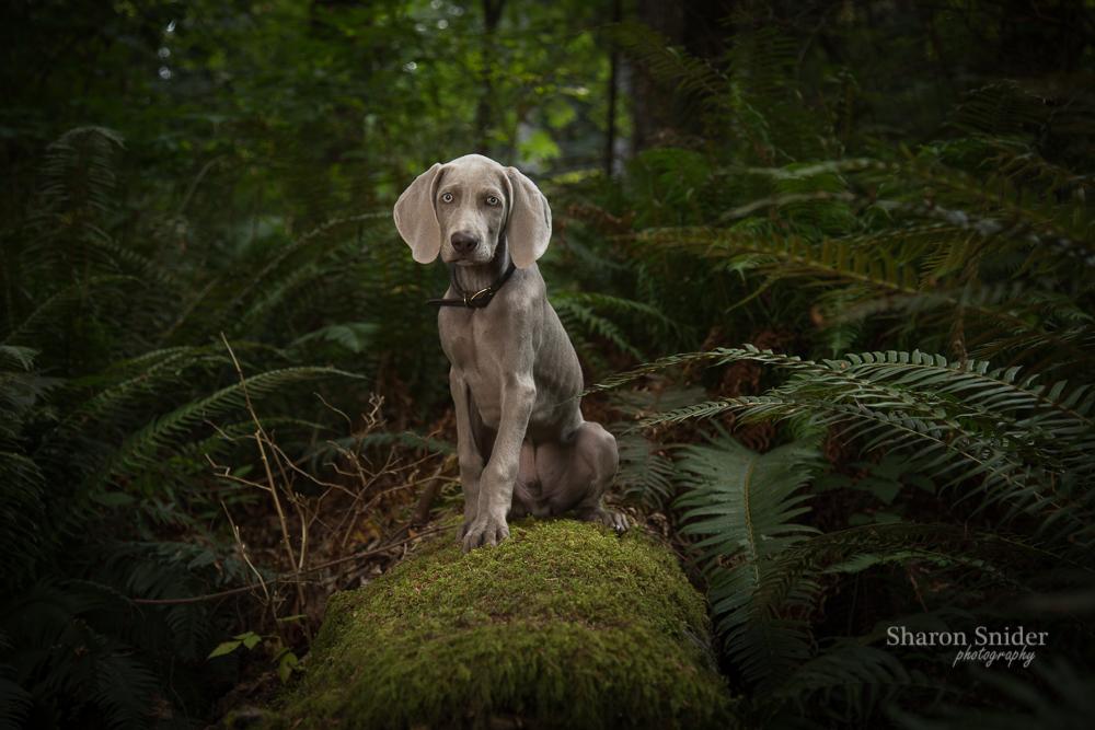 dog Courtenay