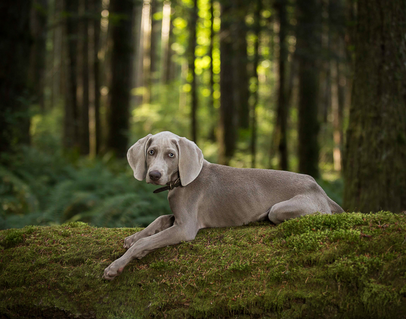 Mowgli by Sharon Snider Photography