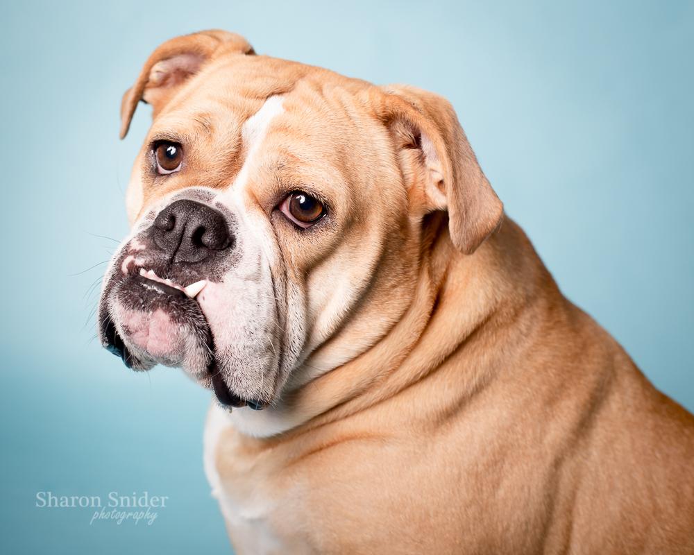 courtenay pet photographer