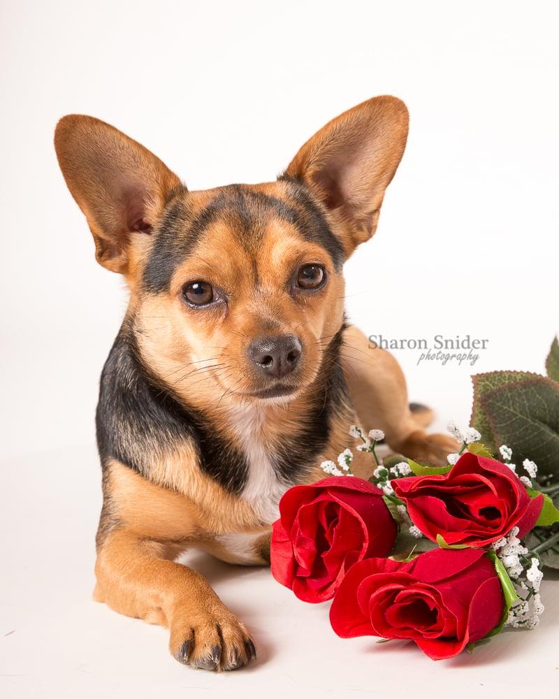 Courtenay pet photography