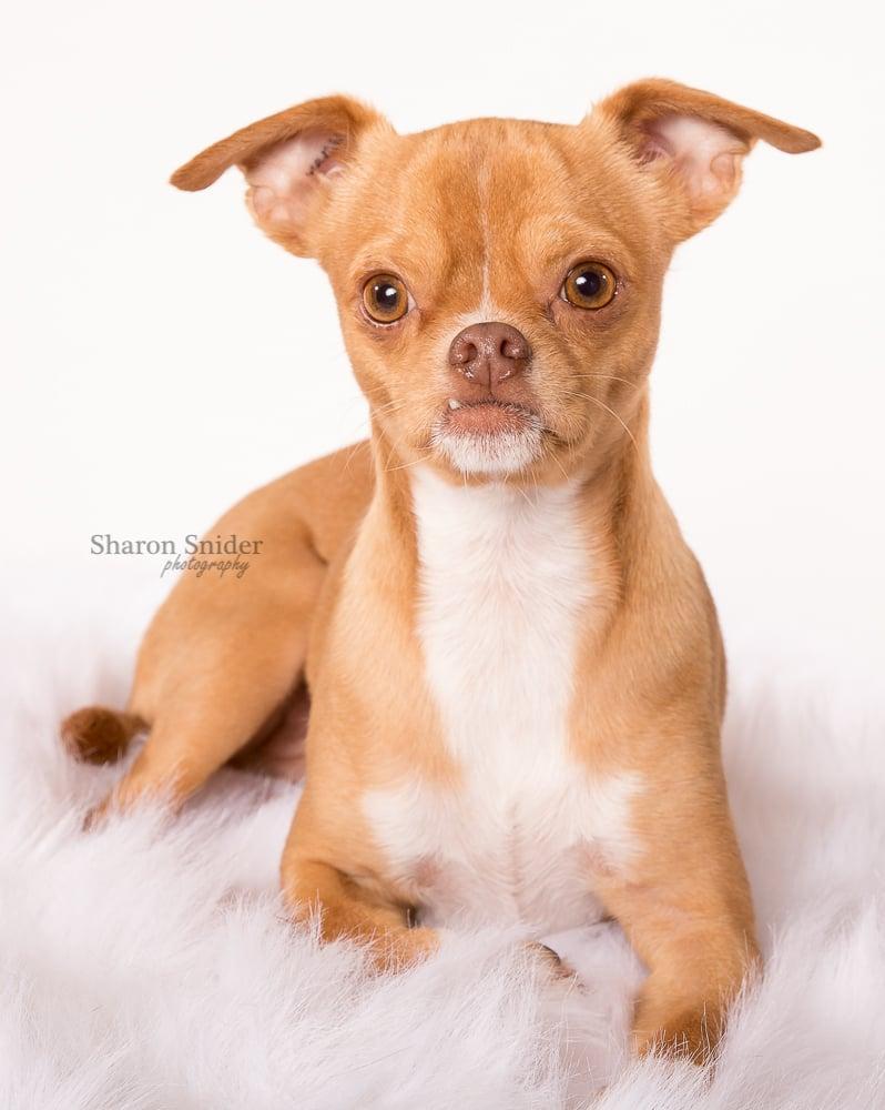 comox pet photography