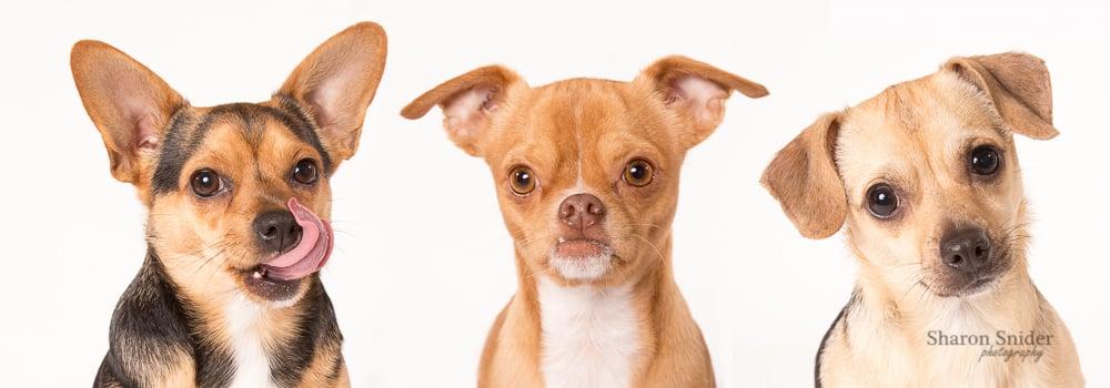 photographer dogs comox