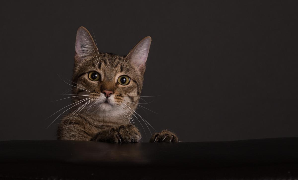 Ben the Cat