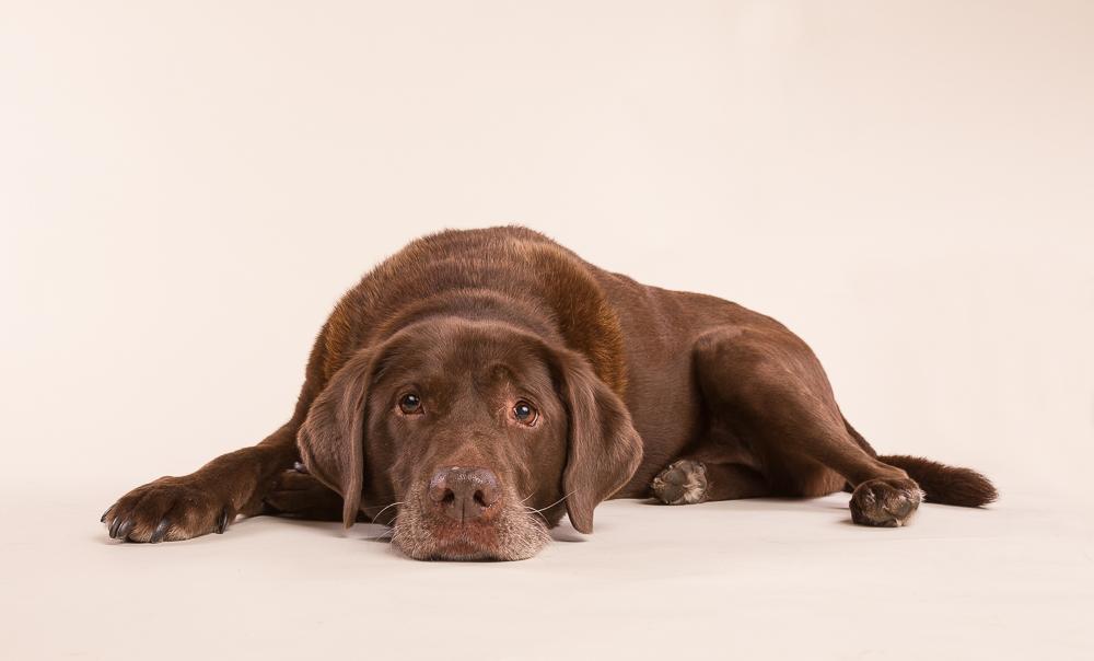 Courtenay dog photography