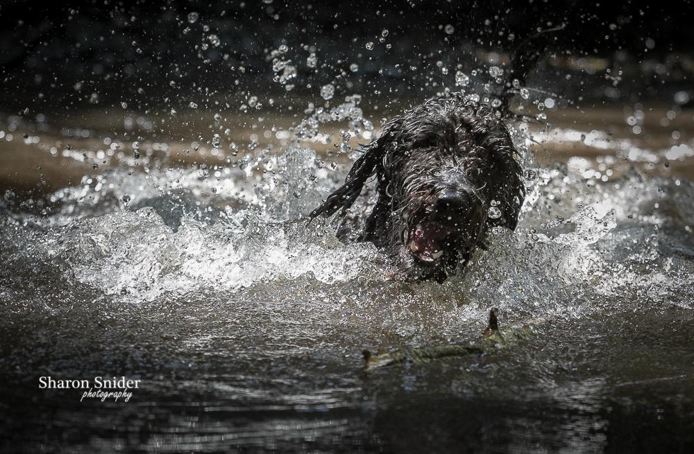 Courtenay dog photographer