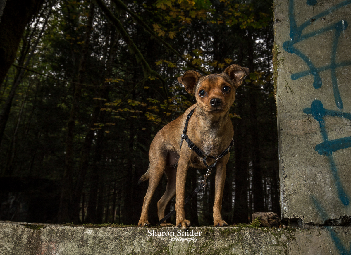 dog photography Courtenay