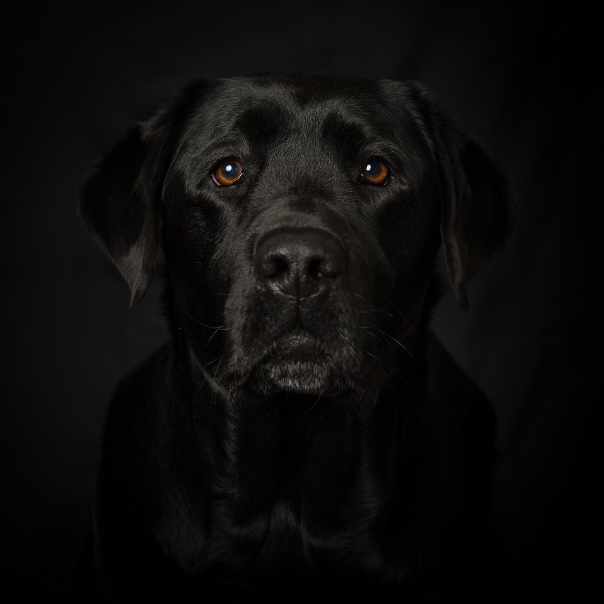 onyx black dog