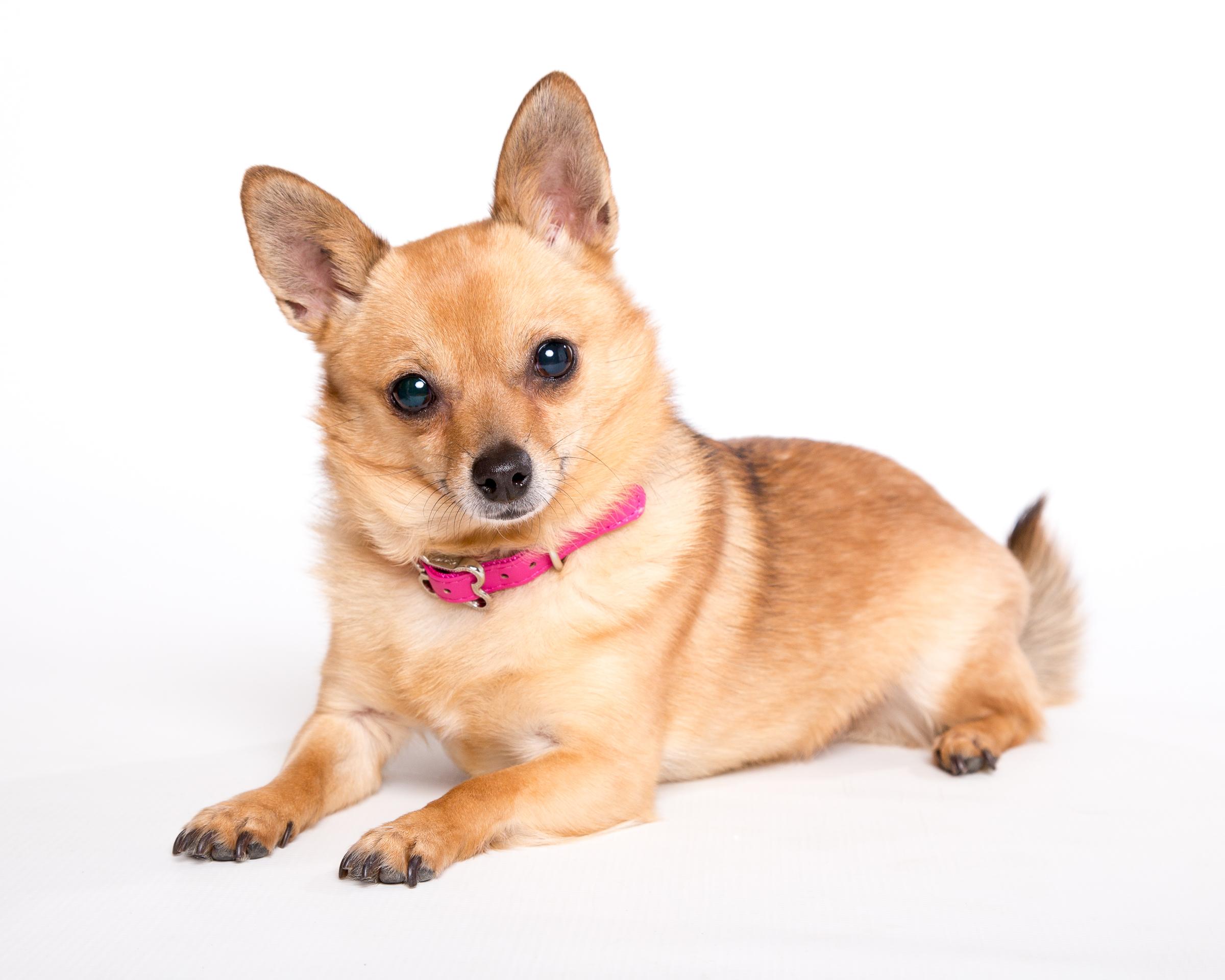 courtenay dog