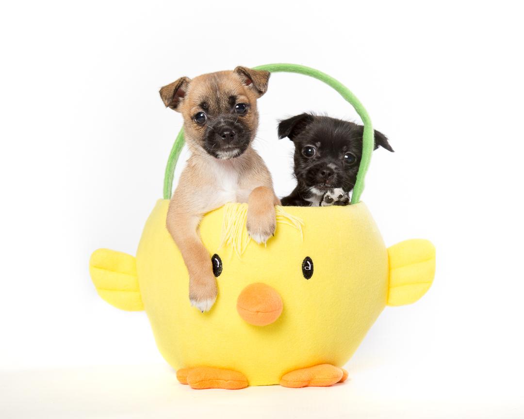 courtenay puppies