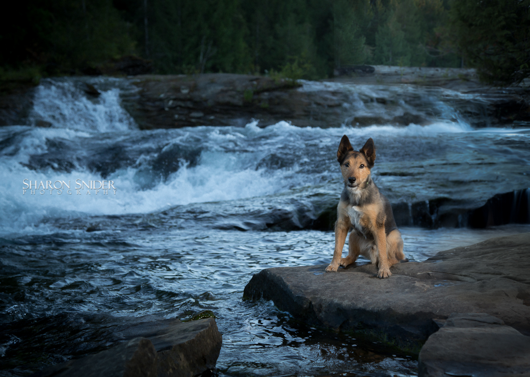 dog at nymph falls