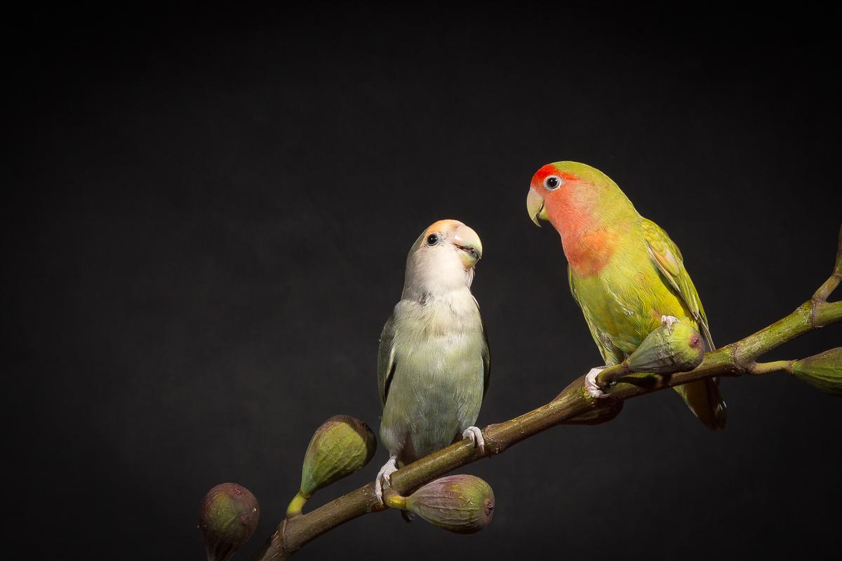 lovebirds-5563-2.jpg