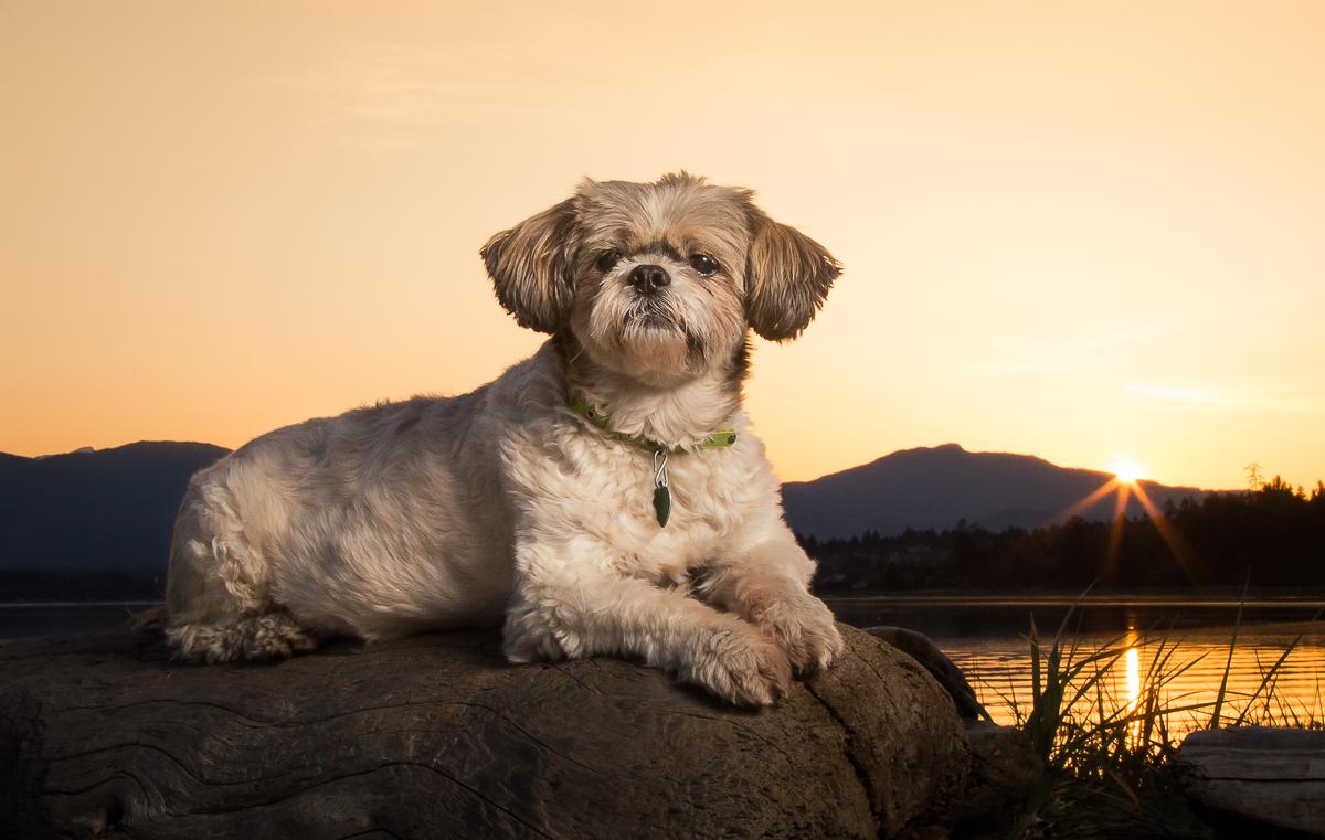goose spit park sunset