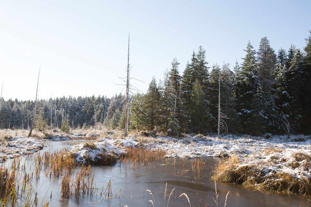 seal bay meldas marsh