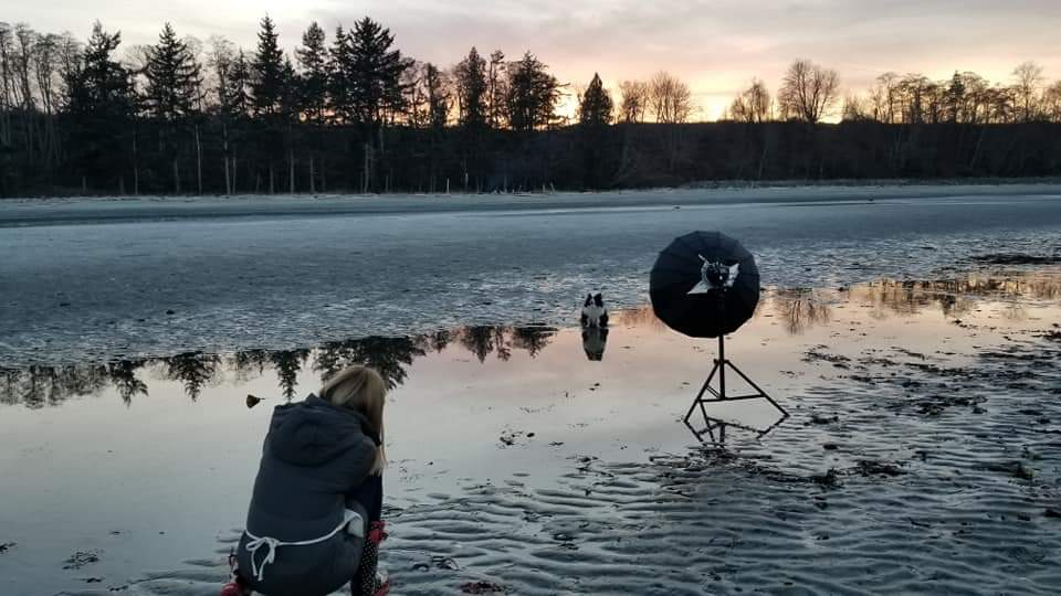 dog photographer at beach