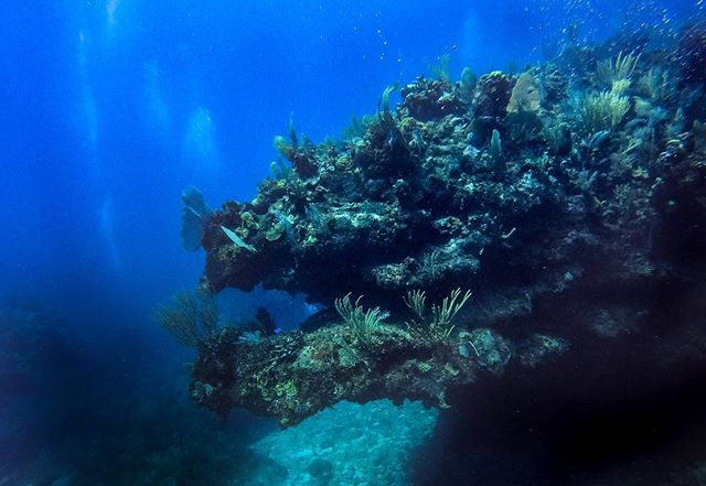 """Dives 4 & 5, """"Dragons Lair"""" and """"Split Rock"""" so many swim-throughs and wicked sea life."""
